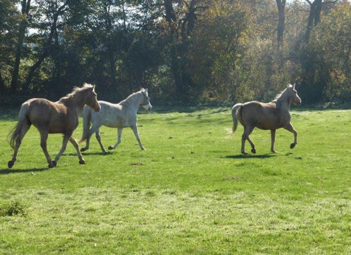 Au bonheur des vieux chevaux