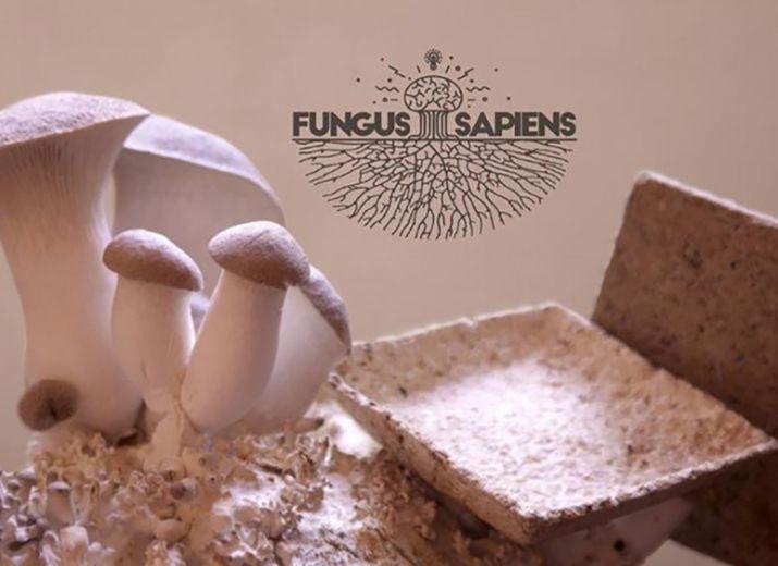 Des champignons pour sauver le monde!