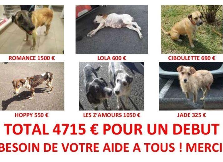 4715 € de frais vétérinaires en 10 jours pour ces 7 chiens !