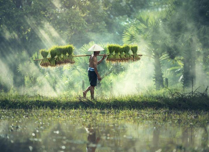 (Ethnobotanique) Des plantes & des Hommes : destins liés sous les tropiques
