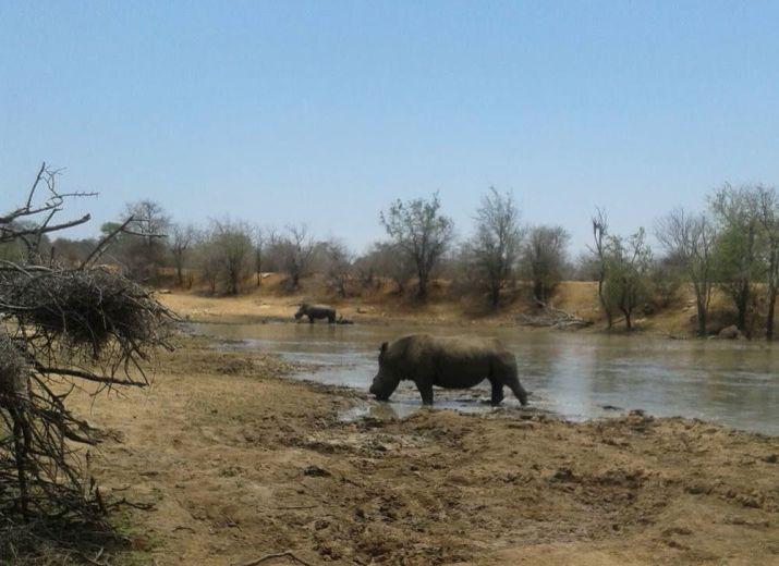 Rhino-Radar - Drohnen gegen Wilderei