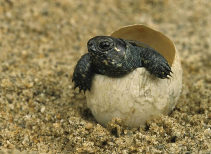 SAUVONS LES TORTUES !