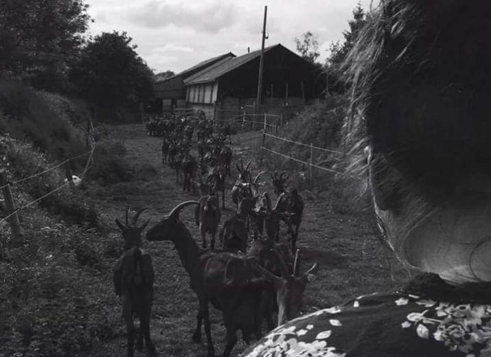 Aidons Laura et ses chèvres