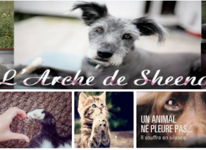 SOS URGENT SOINS ANIMALIERS