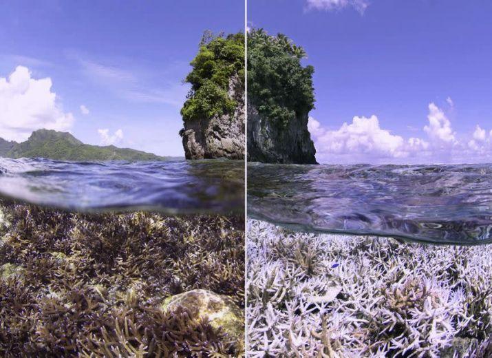 Adopt a coral