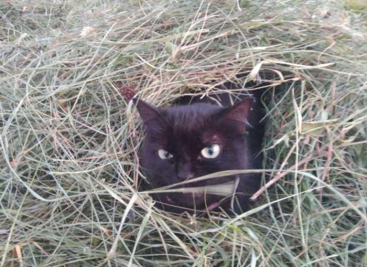 ma chatte noire pics
