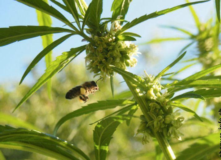 Pierre-Yves veut sauver les abeilles aidons-le ! URGENCE
