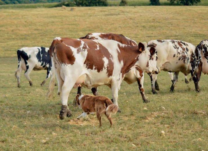 Jeune agriculteur en détresse