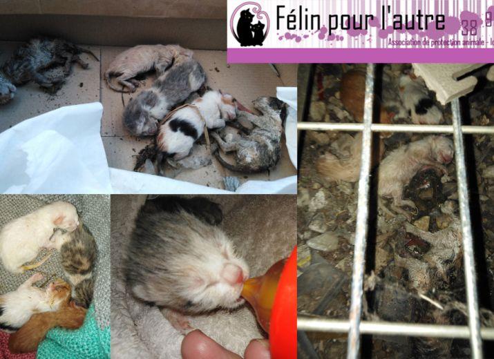 Association FELIN POUR L'AUTRE, Aide à la prise en charge de chatons