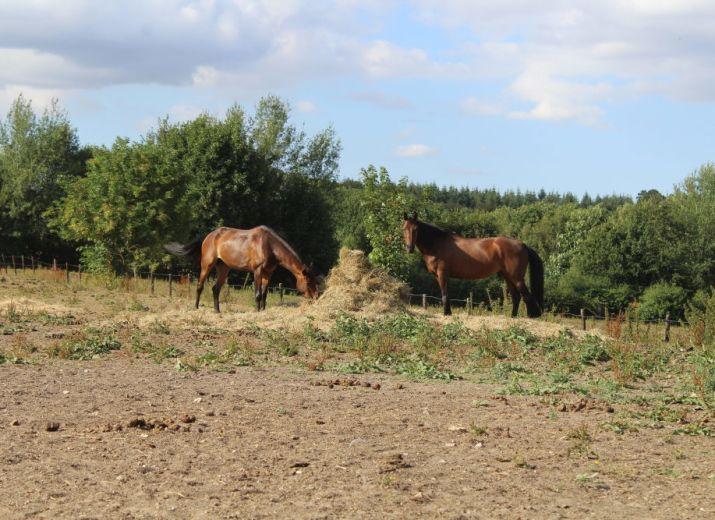 Participer au bien-être de chevaux et à l'entretien des installations