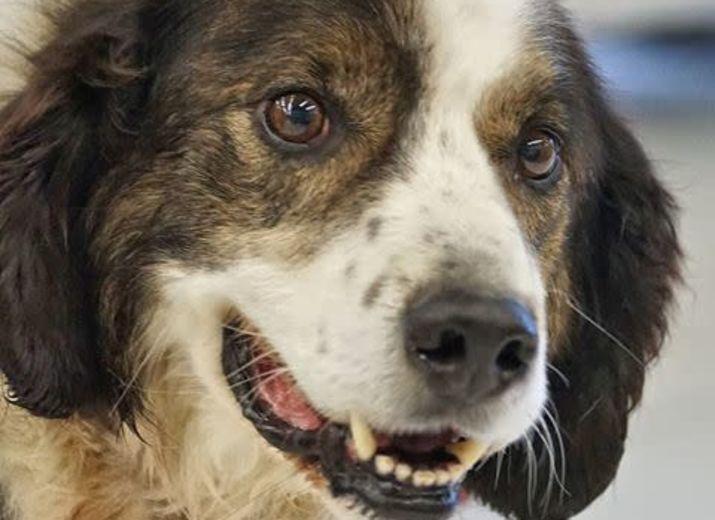 Aide au frais vétérinaire pour nos vieux chiens à l'adoption