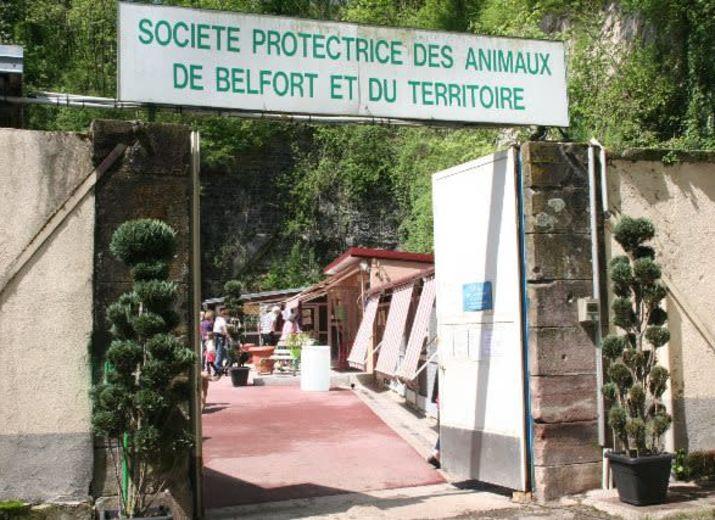 le refuge SPA de Belfort a besoin de vous