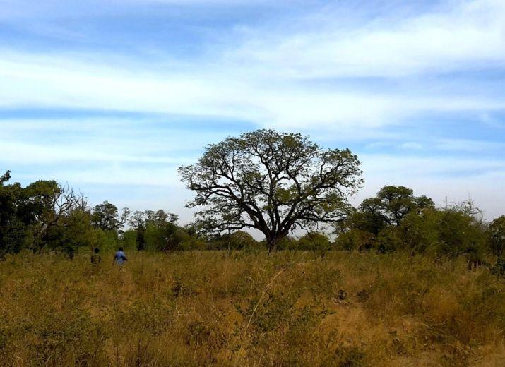 Land für die Gärten von Silmandé