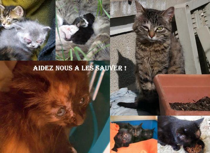 APPEL A L'AIDE DES PATTOUNES DU COEUR