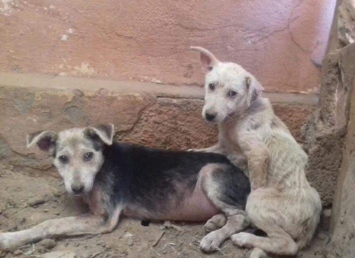Nourriture pour les chiens d'Agadir