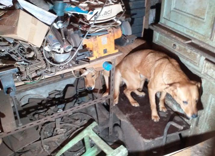 Aidez-nous à sauver les 12 chiens rescapés de Ban de Laveline