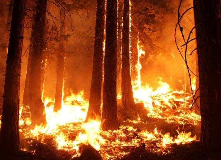 Brauche Geld für Kerosin um noch mehr und schneller Bäume zu verbrennen