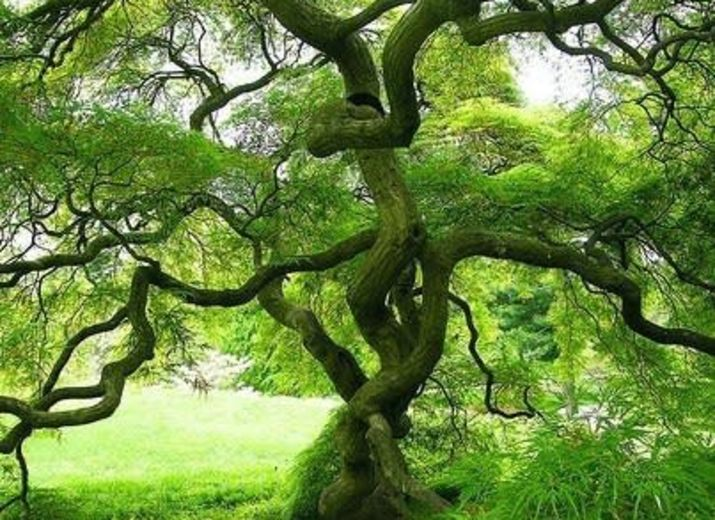 1 euros pour replanter des arbres