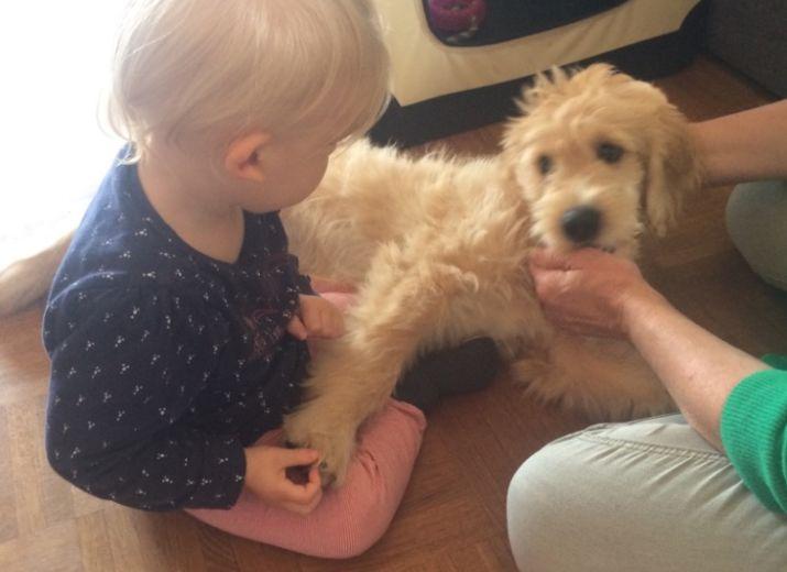 Mattea's Weg zum Therapiehund