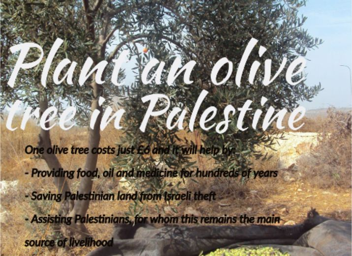 Plant an olive tree in Palestine