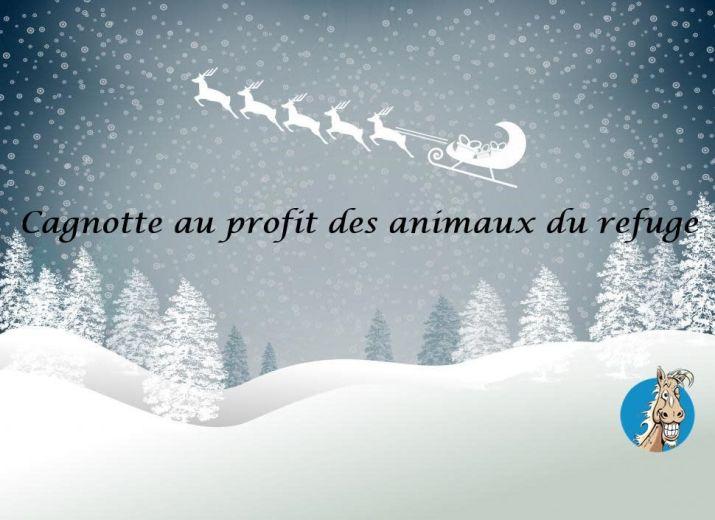 Cagnotte de Noël 2019 pour les pensionnaires du refuge SOS Cheval