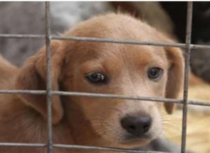 Soutiens à des refuge animaliers