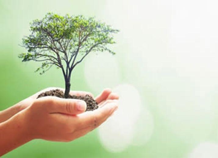 Reforestations de forets
