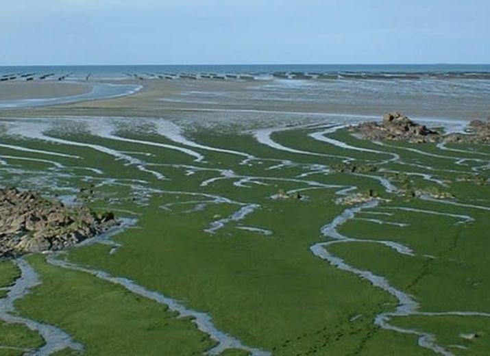Halte aux Marées Vertes, soutien au combat contre les Algues Vertes en Bretagne