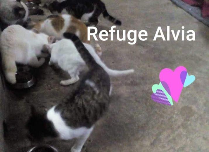 Des croquettes pour notre refuge ALVIA <3