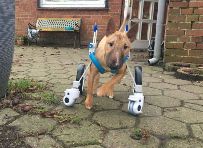 Ein Rollstuhl für Bulli Roswitha