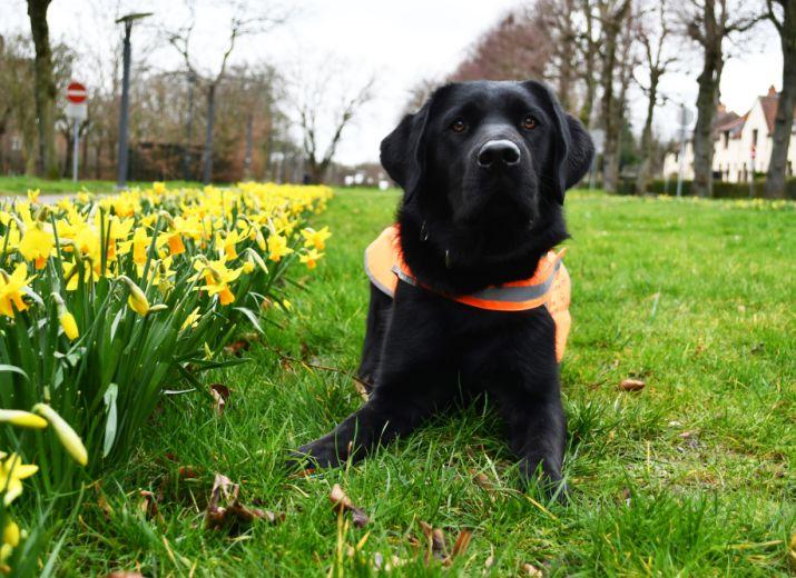 Aidez-nous à faire de Ramsès un chien-guide d'aveugle