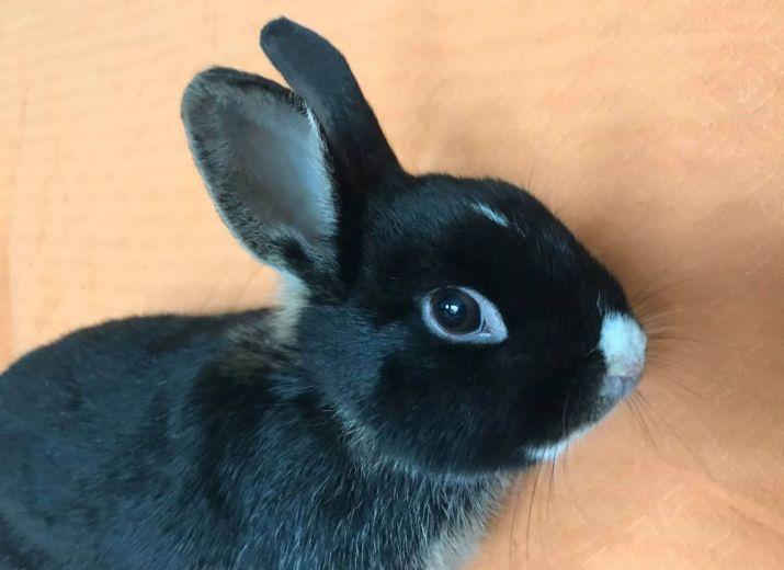 6 lapins sauvés in extremis