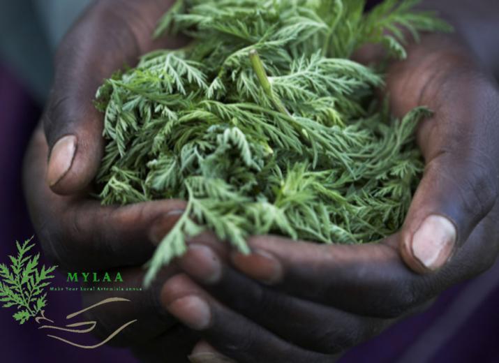 MYLAA contre le paludisme