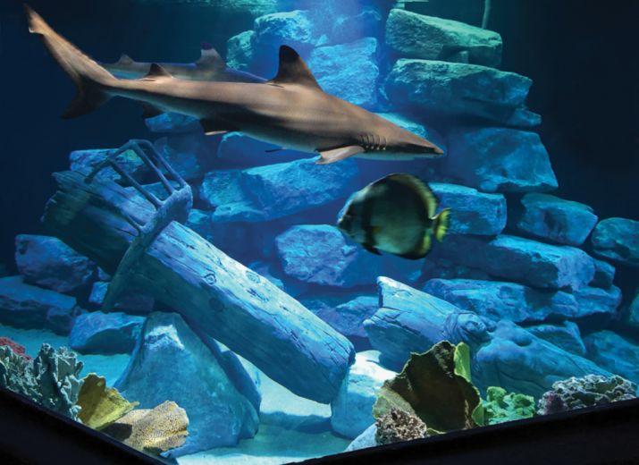 Help Aquarium d'Amnéville