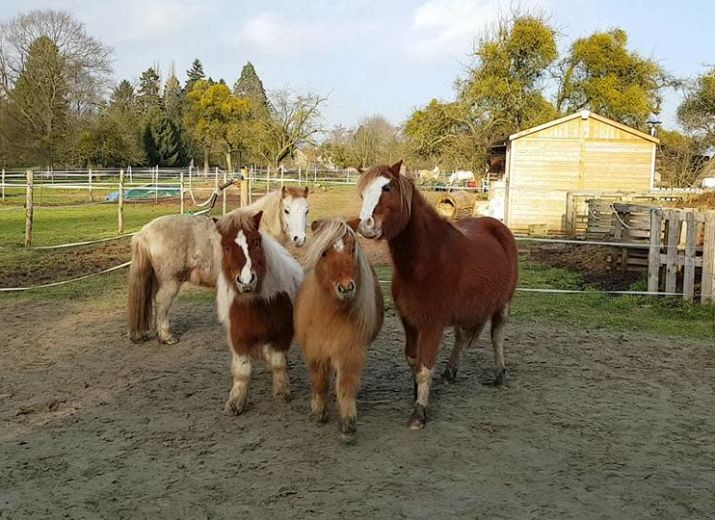 Les supers poneys d'Equi-libres ASBL ont besoin de vous