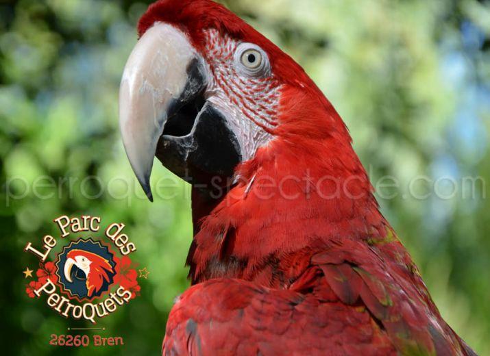 Soutien au Parc des Perroquets