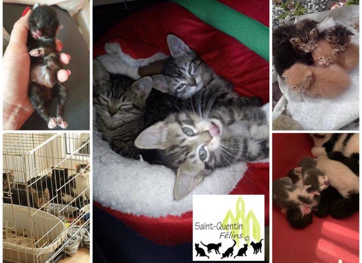 Aidez nous à sauver les chatons pendant le confinement