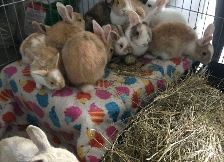 Sauvetage de 14 lapins, besoin d'aide pour leur prise en charge !!