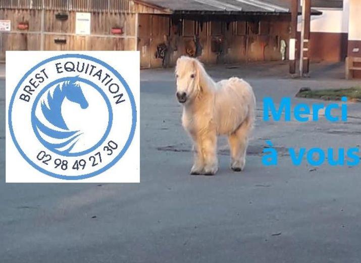 Soutien au club de Brest Equitation