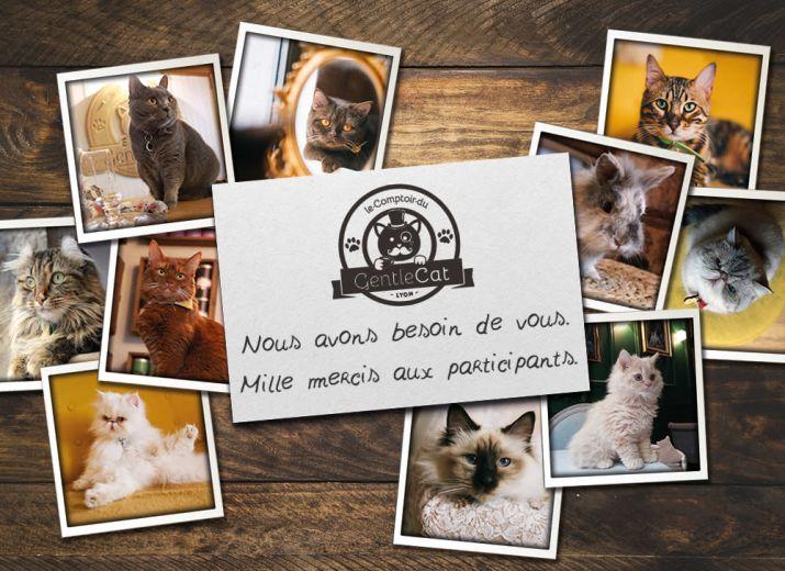 Le GentleCat, bar à chats lyonnais, a besoin de vous...