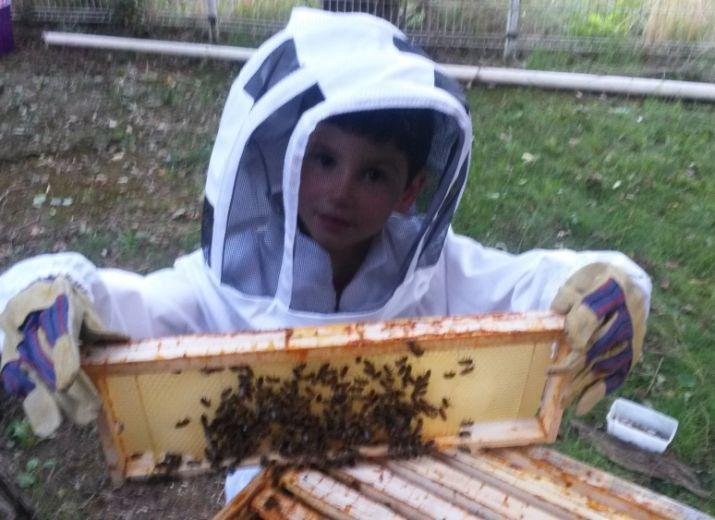 Boostons le miel en Métropole lilloise !