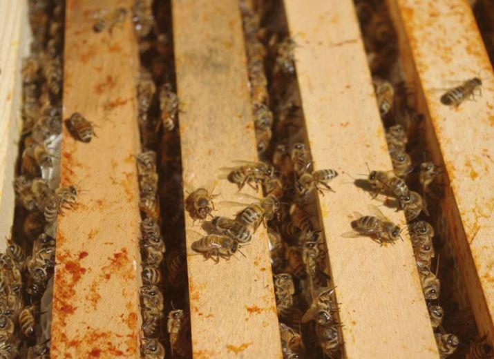 Pertes de ruches suite au vol et inondation