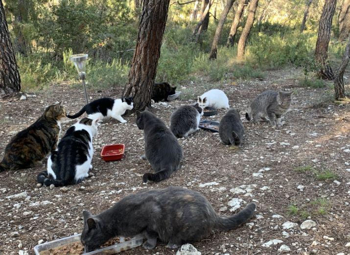 Nourriture et soins chats errants
