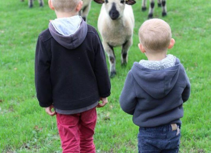 Notre élevage de moutons Hampshire