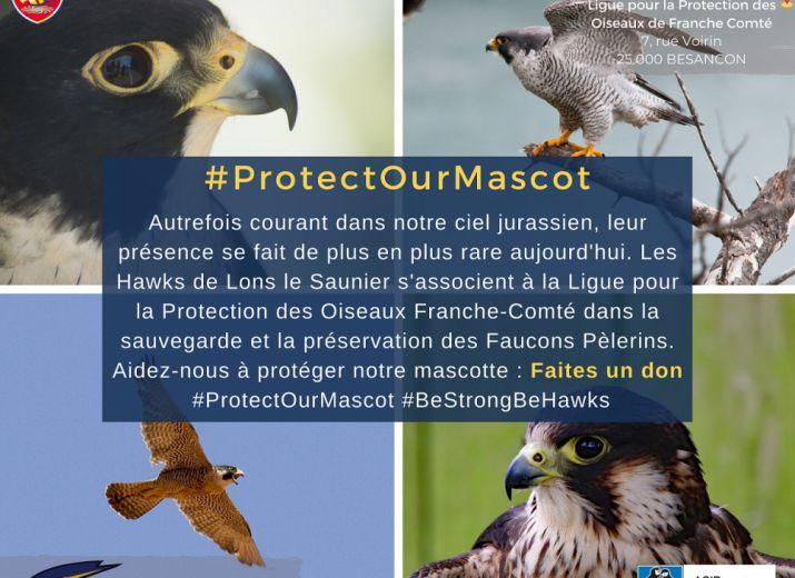 #ProtectOurMascot - Protection des Faucons Pèlerins