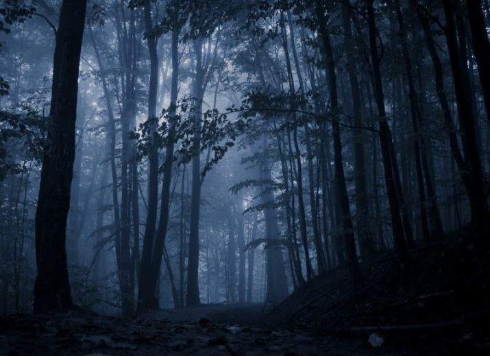 Avant que naisse la forêt. Court métrage.