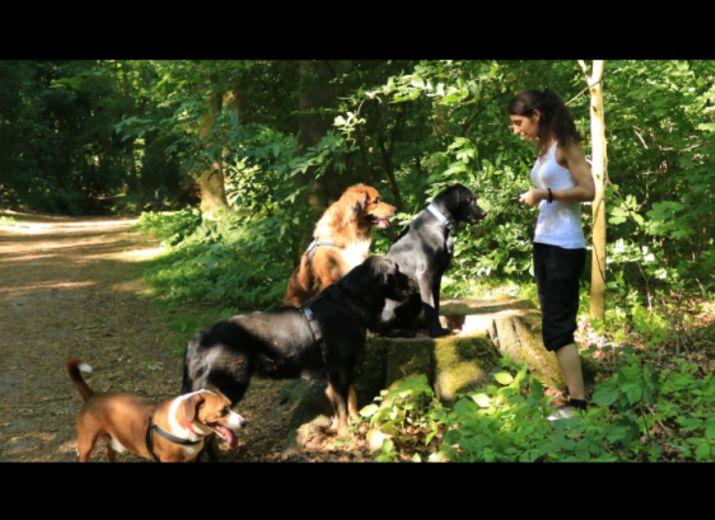 Hundepsychologin