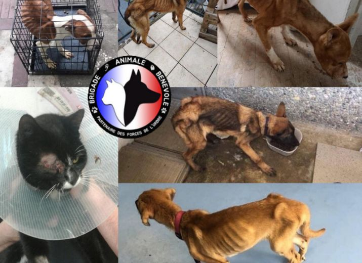 Aidez la Brigade Animale Bénévole