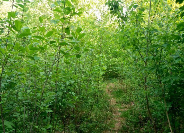 Une mini forêt à Thimister