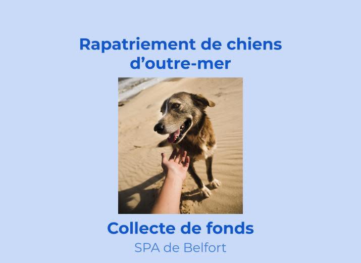 Sauvetage chiens d'outre-mer